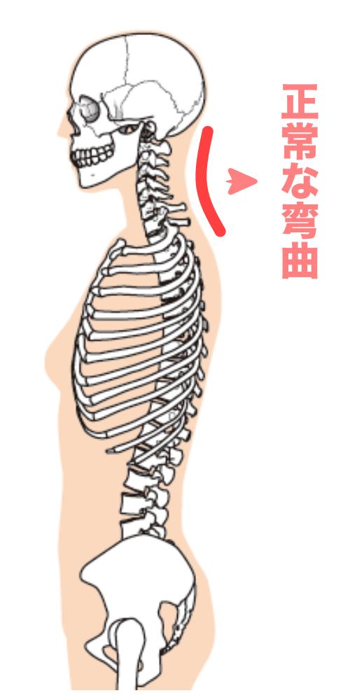 正常な首の弯曲の画像