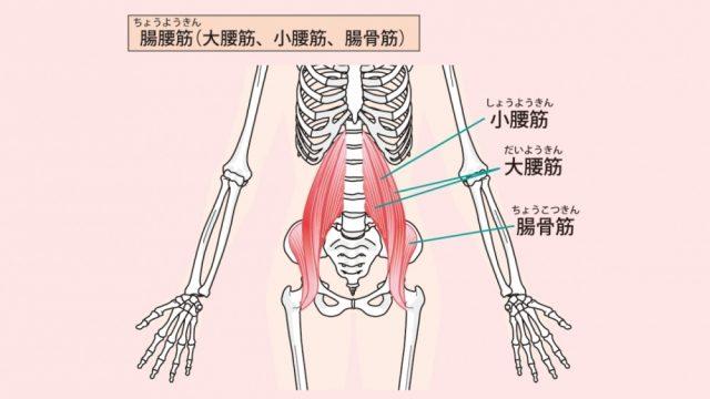腰のインナーマッスルのイラスト(腸腰筋:ちょうようきん)